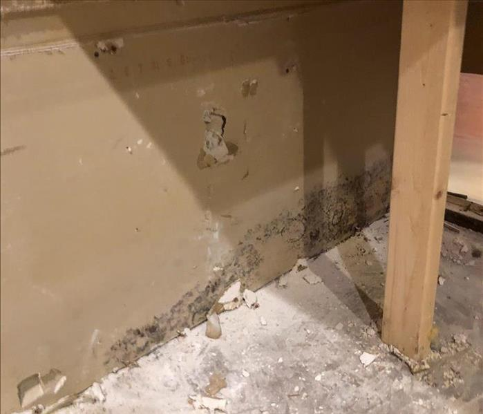 Mold growth behind the cabinets of a kitchen in a San Diego home